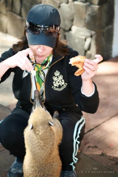 Feeding the coati
