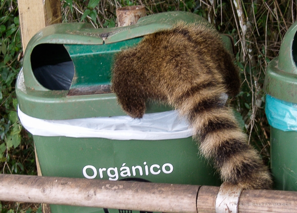 searching the trash cans