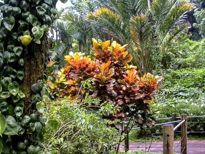 Kauai activities: vitis a botanical garden