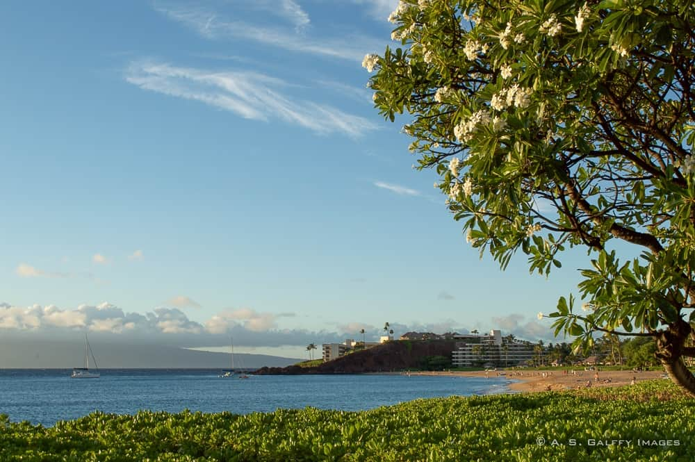 Top 10 Reasons to Fall in Love with Maui