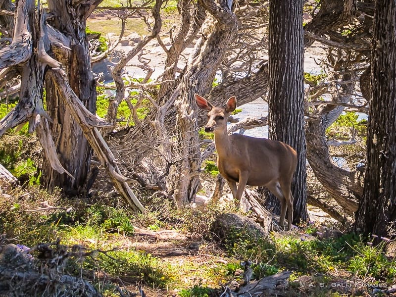 Wildlife at point lobos