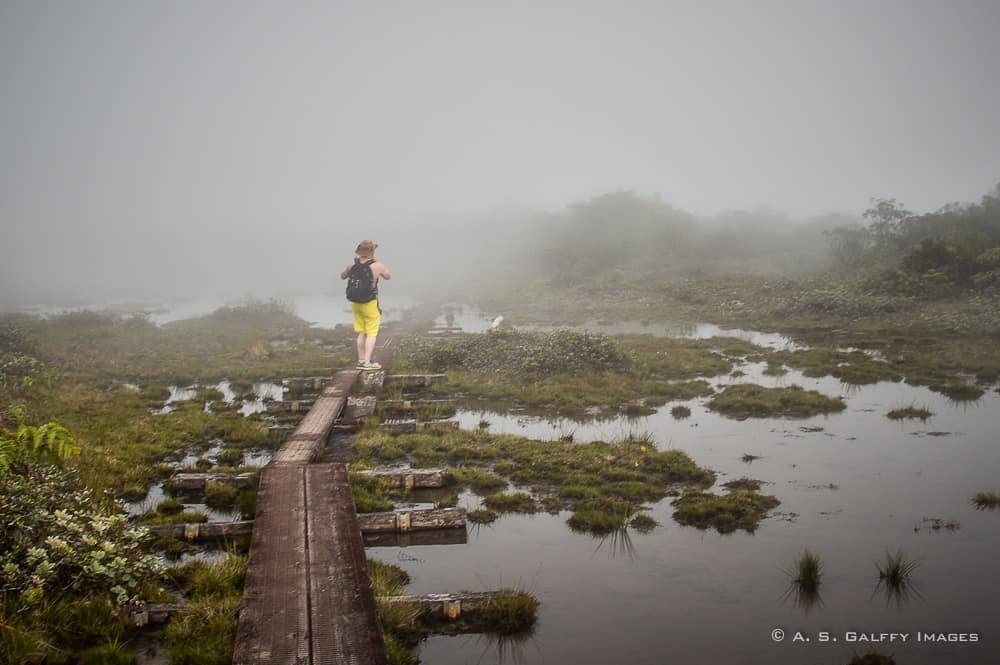 Hiking in the Alakai swamps in Kauai