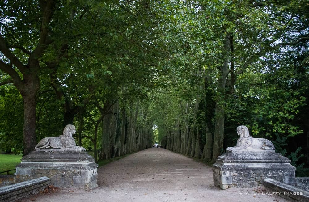 Trees along the drive leading to Château de Chenonceau