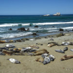The Weekly Postcard: Piedras Blancas Rookery