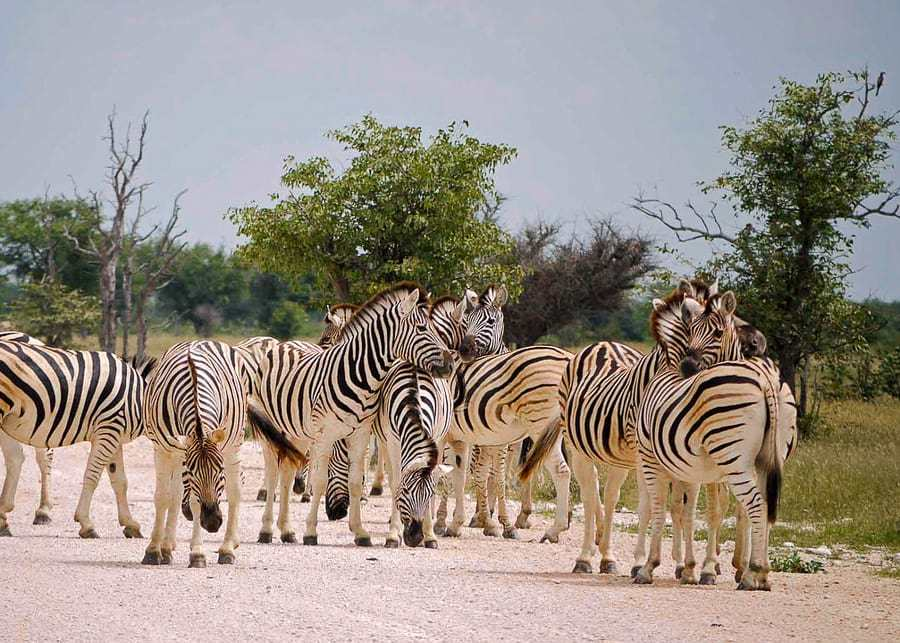 Namibia, one of the best countries to visit in Africa