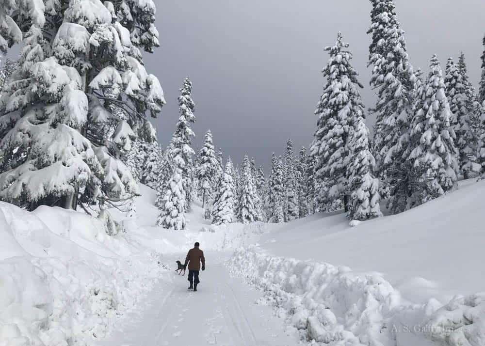 Fun Things to Do in Lake Tahoe in Winter