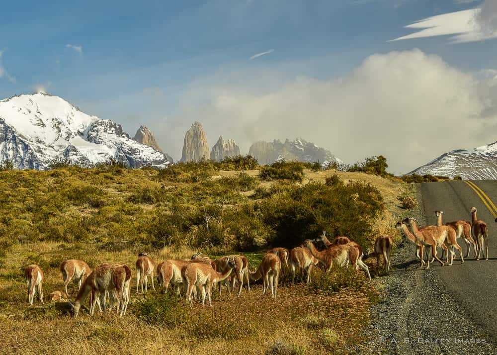 Hiking in Patagonia - Torres del Paine