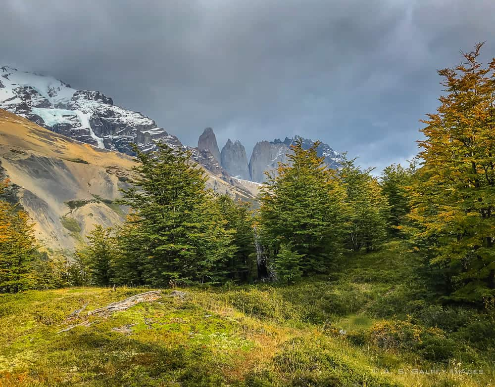 View of the Torres del Paine peaks