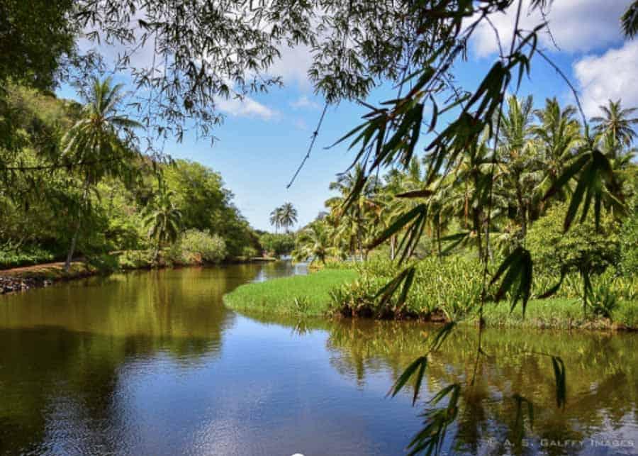 Kauai river