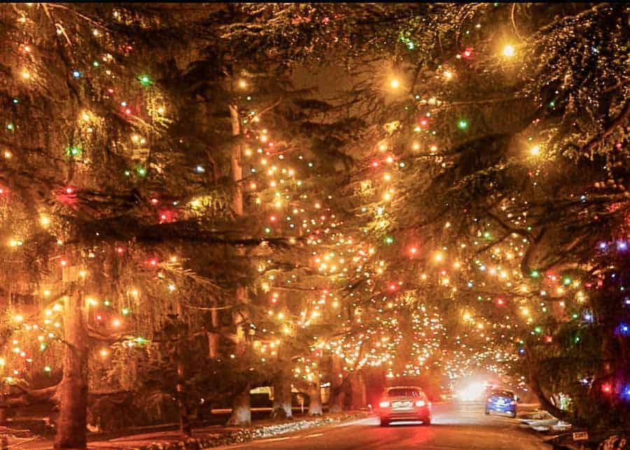 Driving on Christmas Tree Lane in Altadena