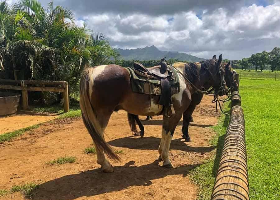 kauai activities: visit a ranch