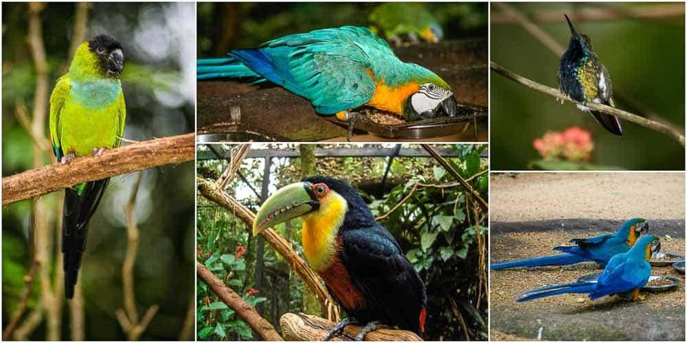 Birds at the aviary in Brazil