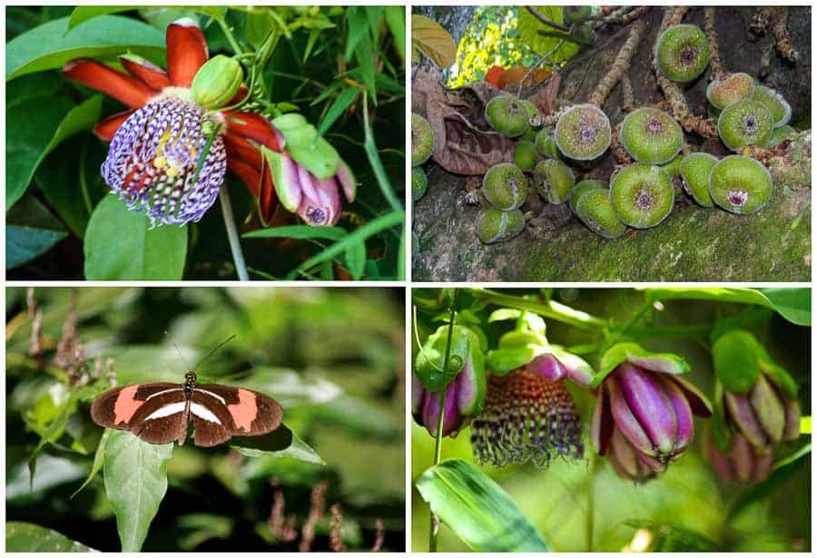 Flora at Iguazu Falls