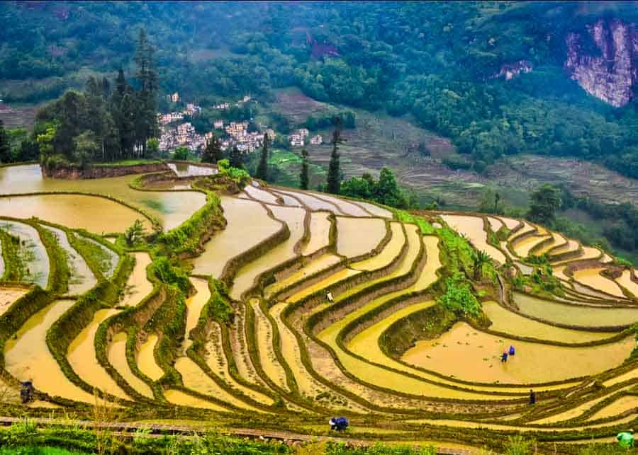 image depicting the Yuanyang Terraced Fields in China