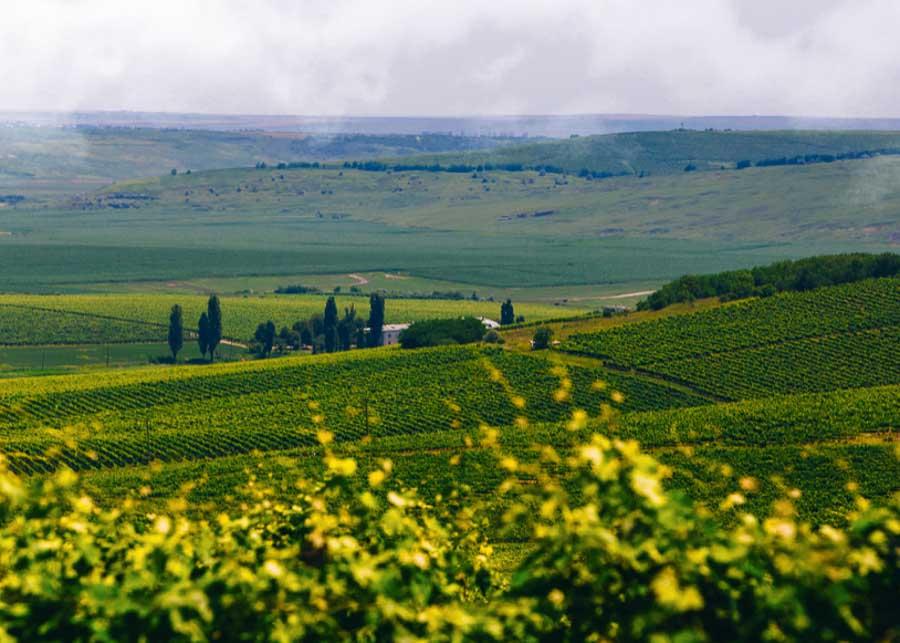 winery in Bucovina Romania