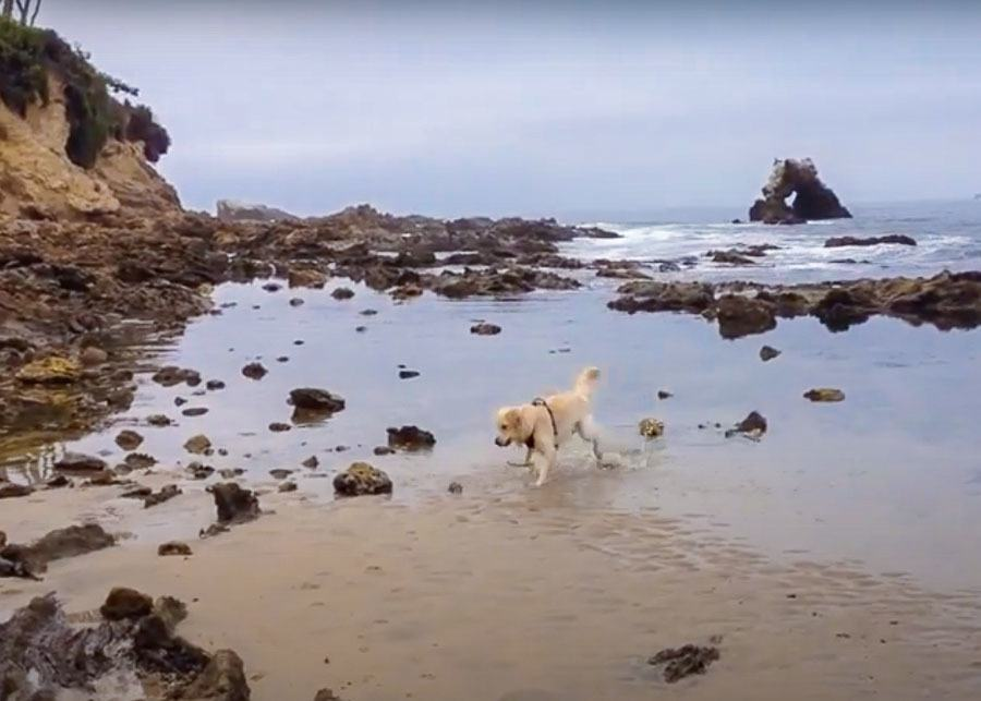 dog playing in the water at Corona Del Mar Dog Beach