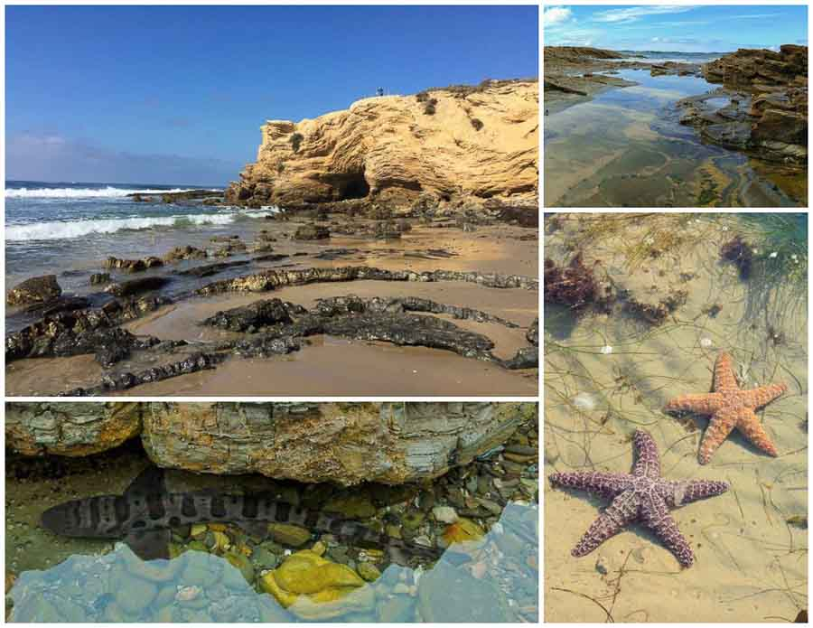 Tide pools at Crystal Cove State Park