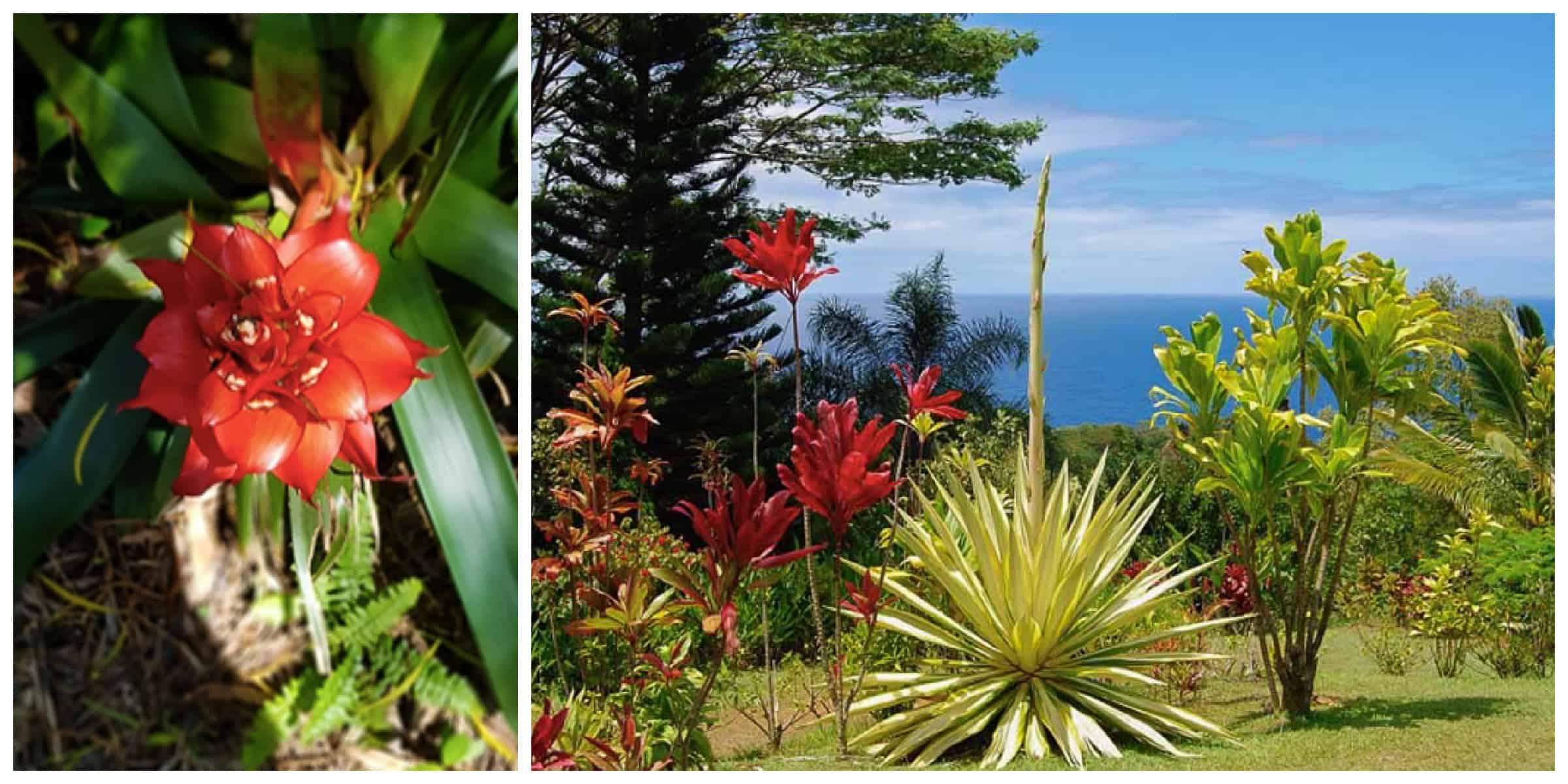Garden of Eden Arboretum, one of the best stops on the Hana Road
