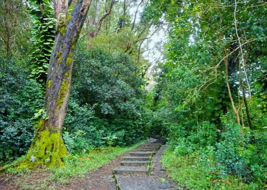 Waikamoi Ridge Trail stop on the Road to Hana