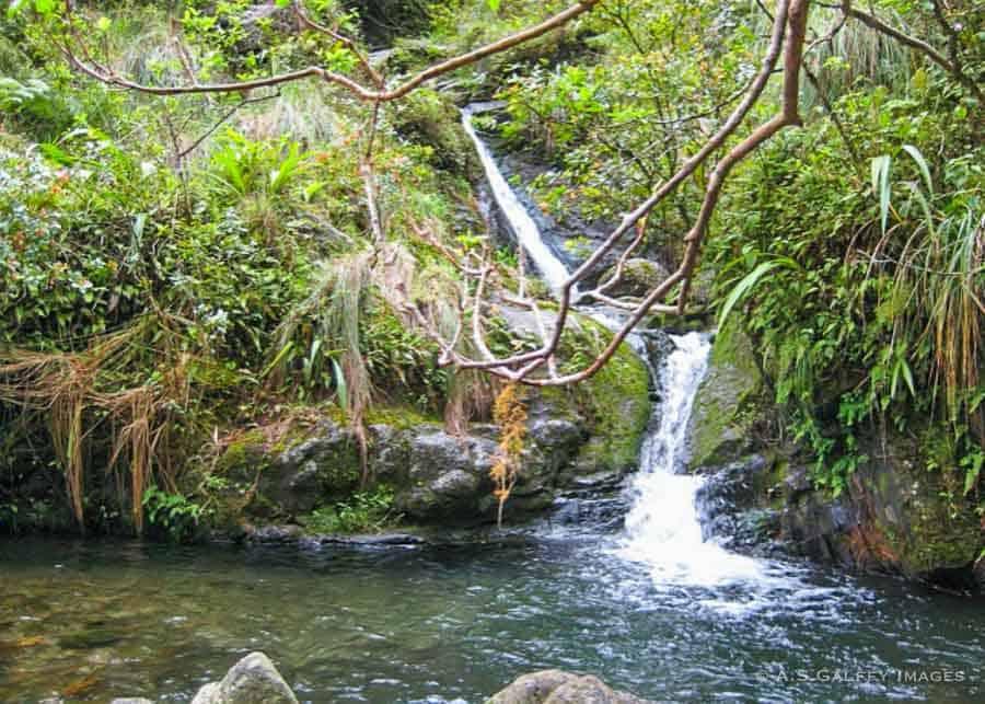 Stream on the Hanakapiai Falls hiking trail