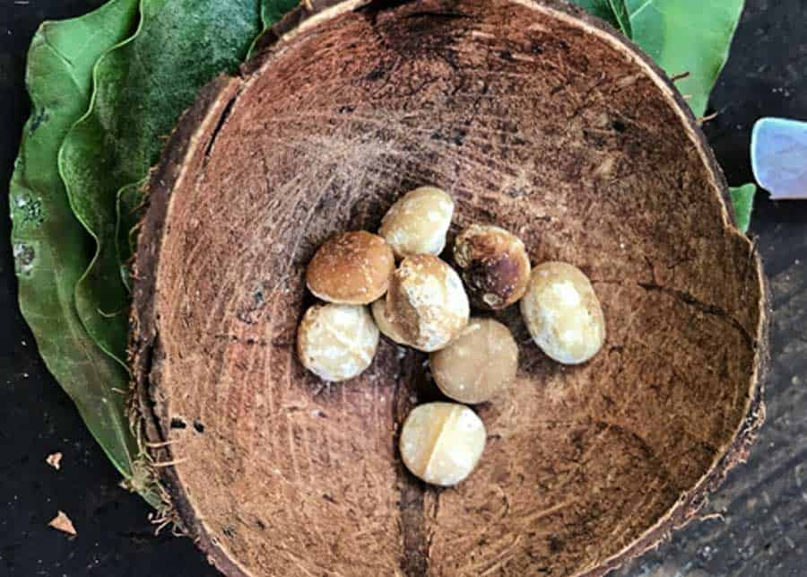 Macadamia nuts in a bowl